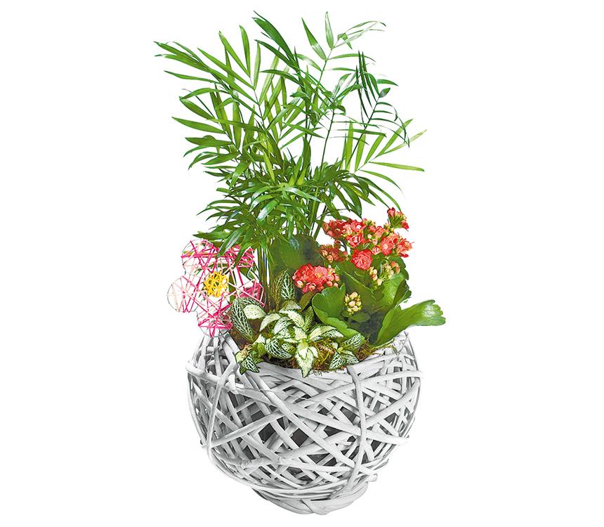 Rastliny v guľatom košíku