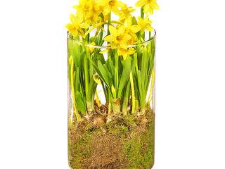 Obrázok Dekorácia jarných kvetov